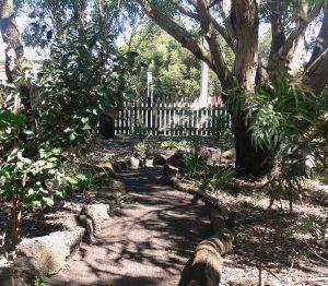 I love my large eucalypts - as do the koalas