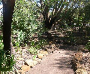 Rock-edged path through the new garden