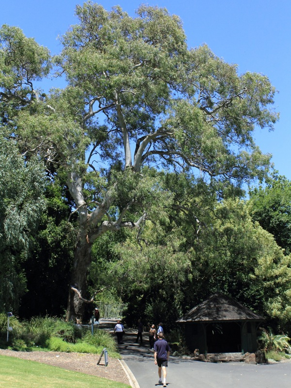 The Separation Tree shows a healthy canopy