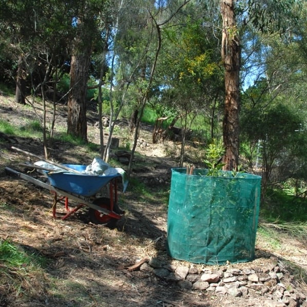 Transplanted macadamia surrounded by protective shade cloth