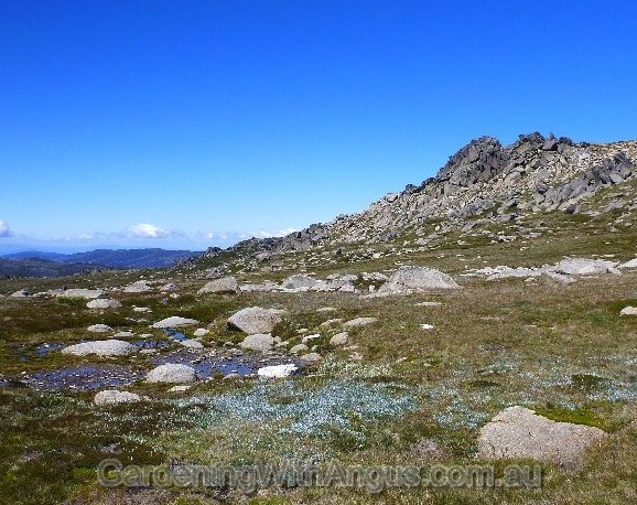 Granite outcrops & glacial erosion around Mt Kosciuszko