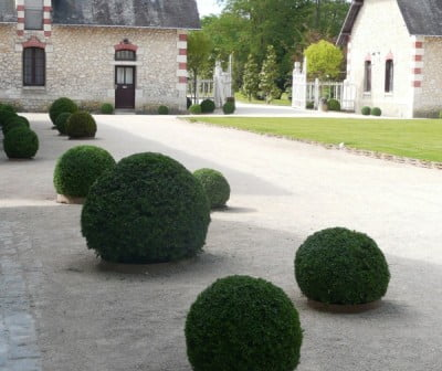 Clipped balls in the grounds of Chateau de Chaumont