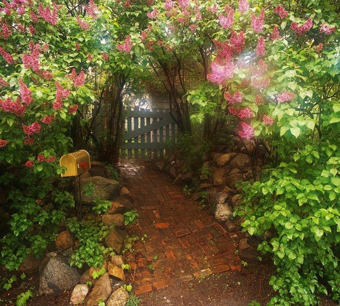 The Landscape Gardener: Gardens With Plants