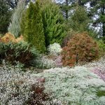 Mixed conifers & cool climate shrubs