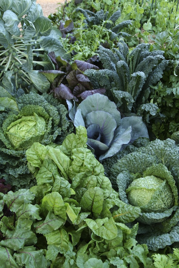 Leafy vegetables will tolerate some shade