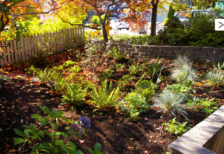 Make a rain garden gardendrum for Rain garden design