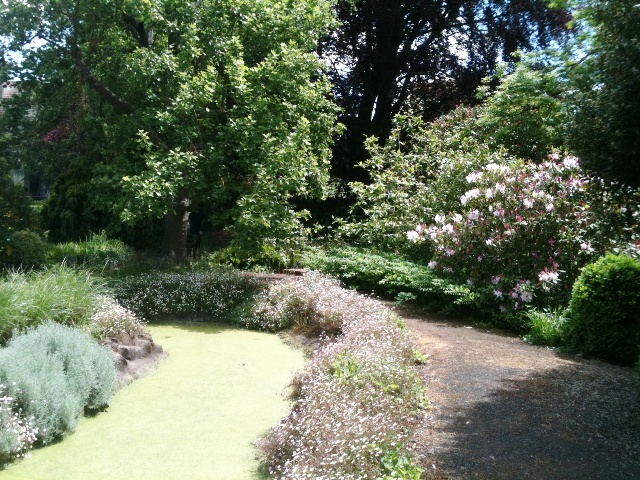 external image Rhododendron-in-backgroudn-with-water-canal.jpg