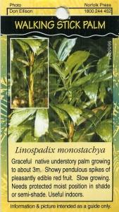 Bushtucker Rainforest Plants Gardendrum