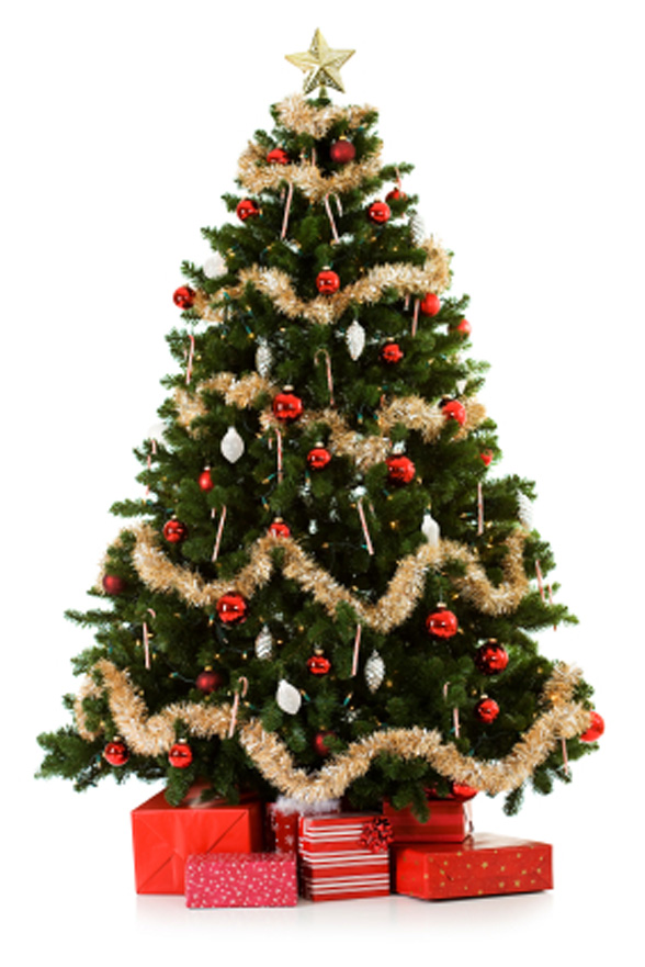 Pics Of Christmas Trees Alluring Of Christmas Tree Com Photos