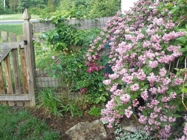 Tammy Schmitt Casa Mariposa - invertebrate garden - fence