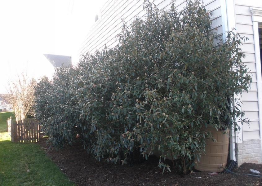 Tammy Schmitt Casa Mariposa - invertebrate garden - evergreens