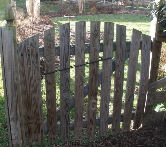 Tammy Schmitt Casa Mariposa - invertebrate garden - gate with bungee cord