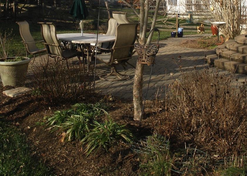 Tammy Schmitt Casa Mariposa - invertebrate garden - patio