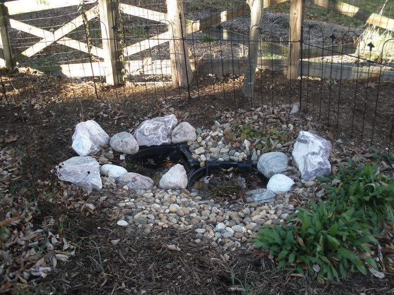 Tammy Schmitt Casa Mariposa - invertebrate garden - container pond