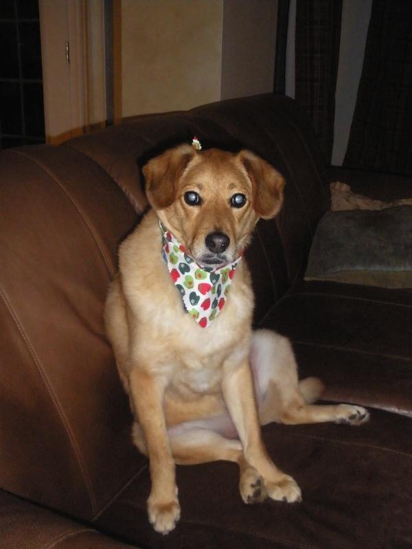 Tammy Schmitt Casa Mariposa - invertebrate garden - dog