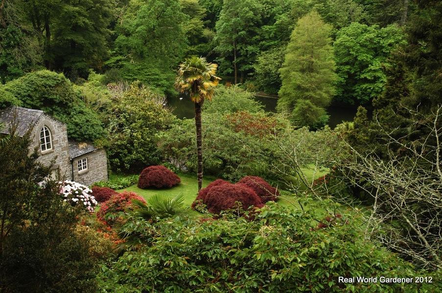 RealWorldGardener cool climate tropical garden