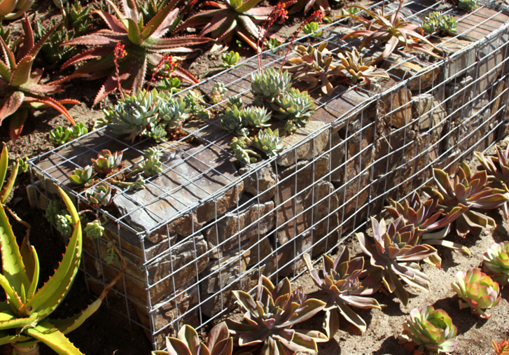 Gabion wall with succulents from gabionbaskets.net