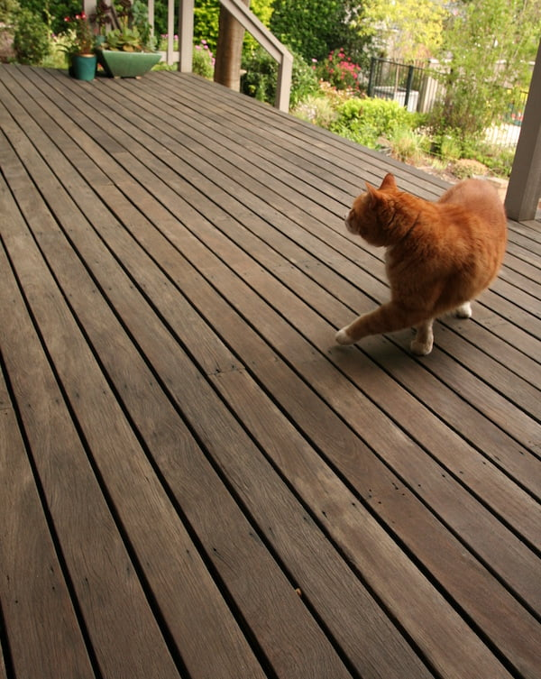 Gray, weathered deck - and Balzac the cat