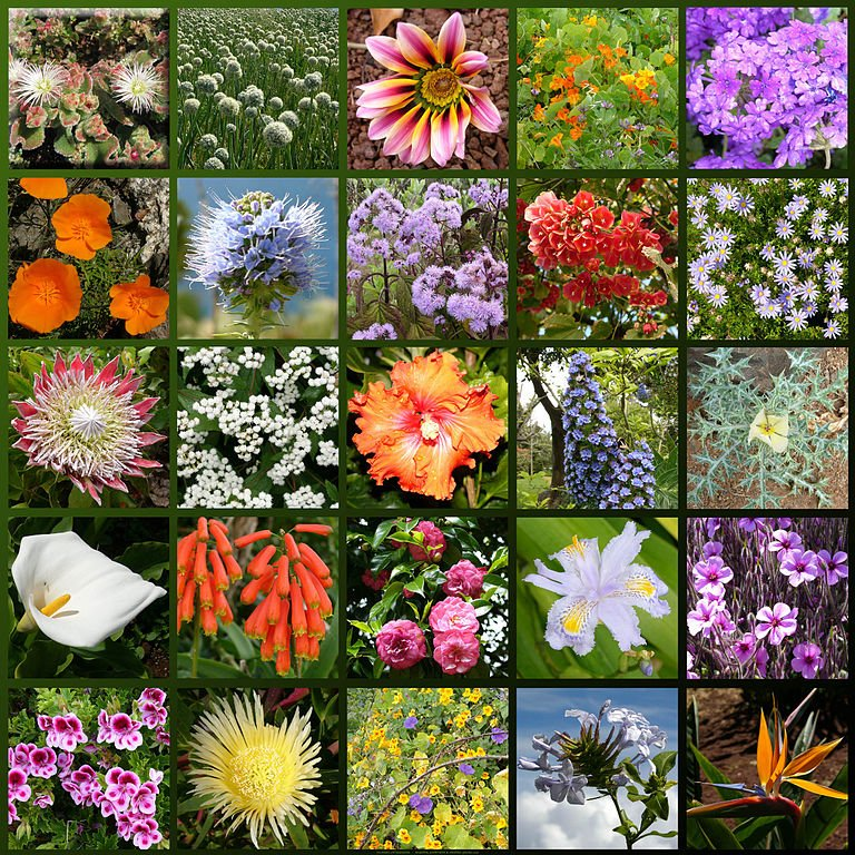 Madeira-flowers - from Wiki Commons