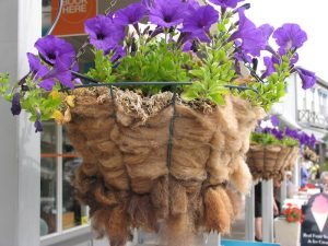 NZ hanging baskets, Akaroa Photo Helen Young