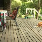 Our grey timber back deck - and Balzac