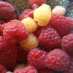 Red and white raspberries ready for breakfast