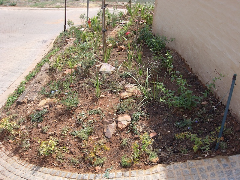 Planting completed