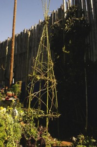 Bamboo and vine tripod