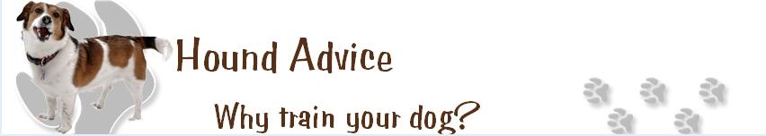 Hound Advice