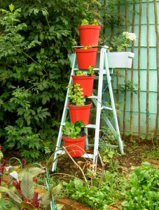 Use your imagination. An abandoned ladder with a fresh coat of paint becomes a pot plant holder