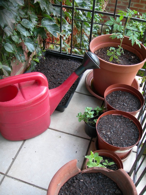 Satisfaction: pots filled, seeds sown, and ready for growing. Resist the temptation to start with too many pots because you still need space to move