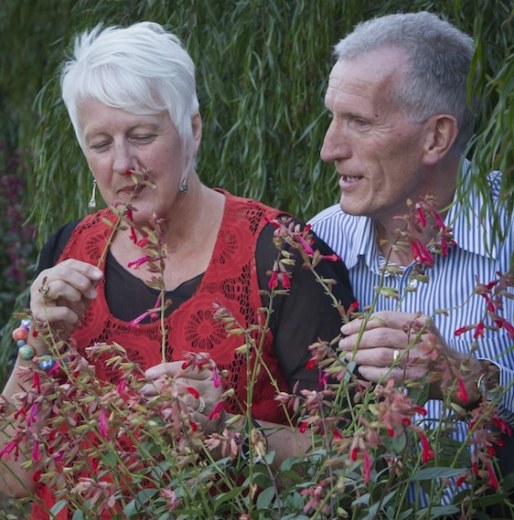 Lyn and Paul Shegog with Salvia 'Ember's Wish'