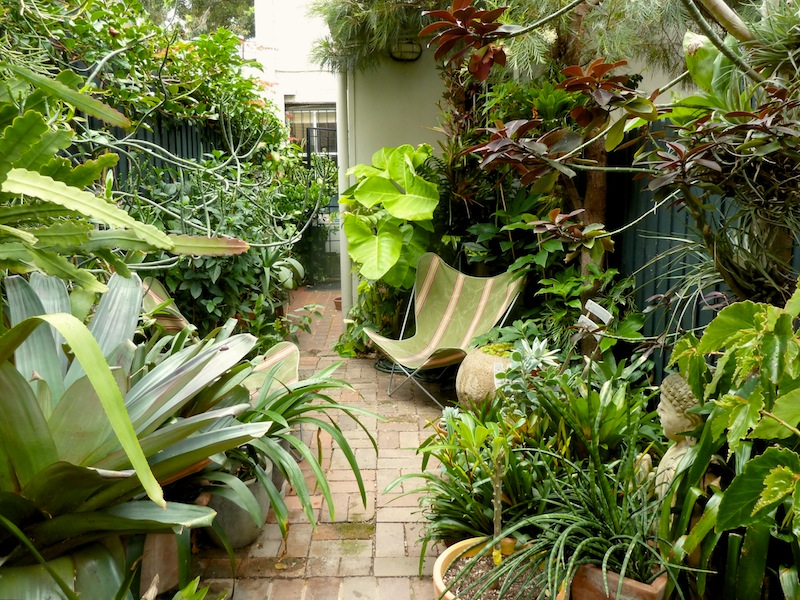 A small courtyard garden filled with Sydney-appropriate plants. Design Peter Nixon.