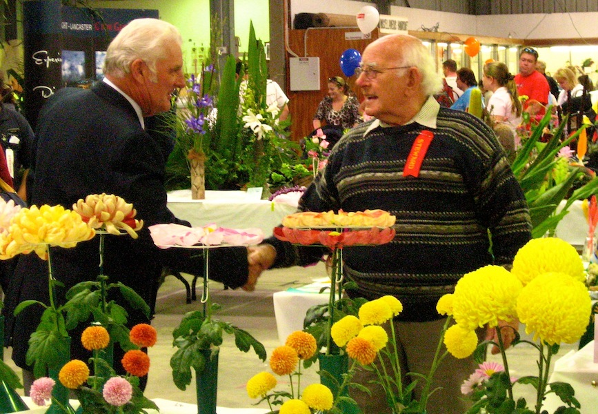 Showing chrysanthemums