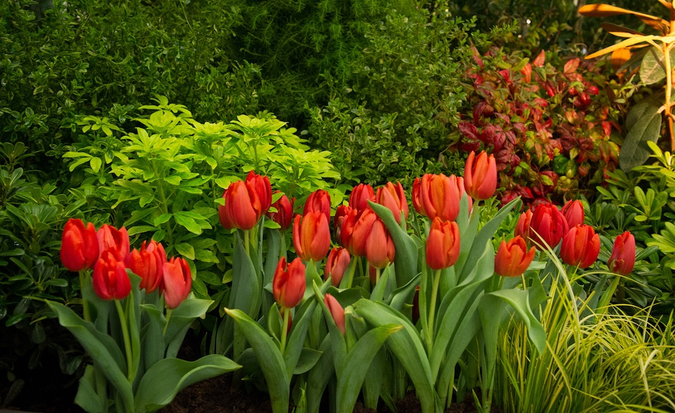 Sublime-Garden-Design-at-the-Northwest-Flower-and-Garden-Show-2013 vibrant tulips, choisya and nandina