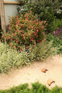 Tree and Shrub Growers MIFGS 2011