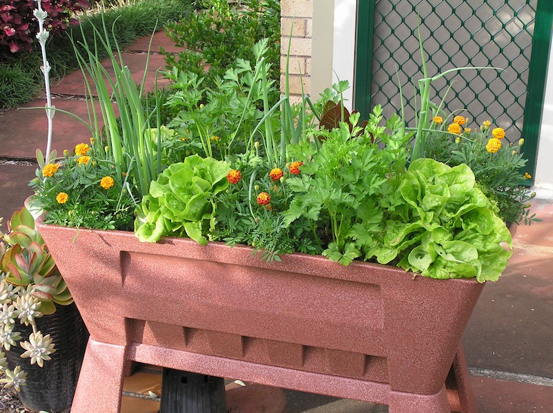 Greens and vegetables in pots
