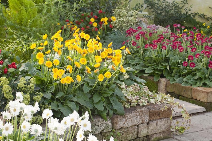 Us National Garden Bureau Names Gerbera Flower Of The Year