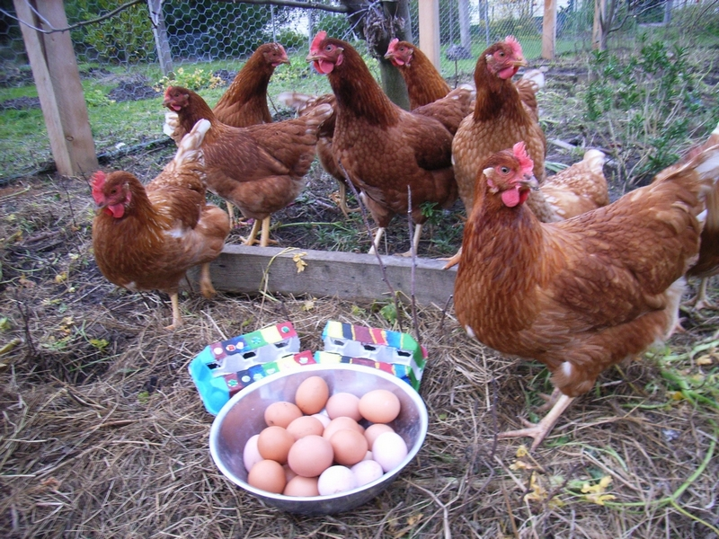 The Crib's 'girls' with their eggs