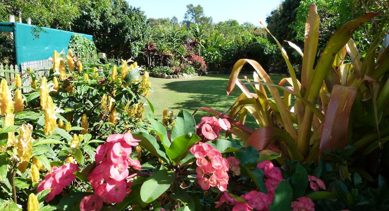 Ian and Judy Wintle's subtropical garden