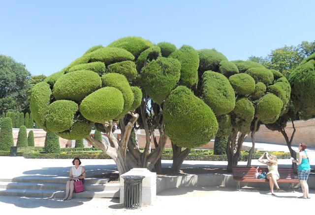 Neatly trimmed hedge in Madrid, Spain