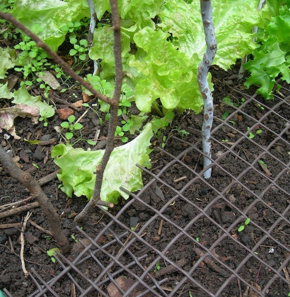 Plastic protective anti-digging mesh on soil