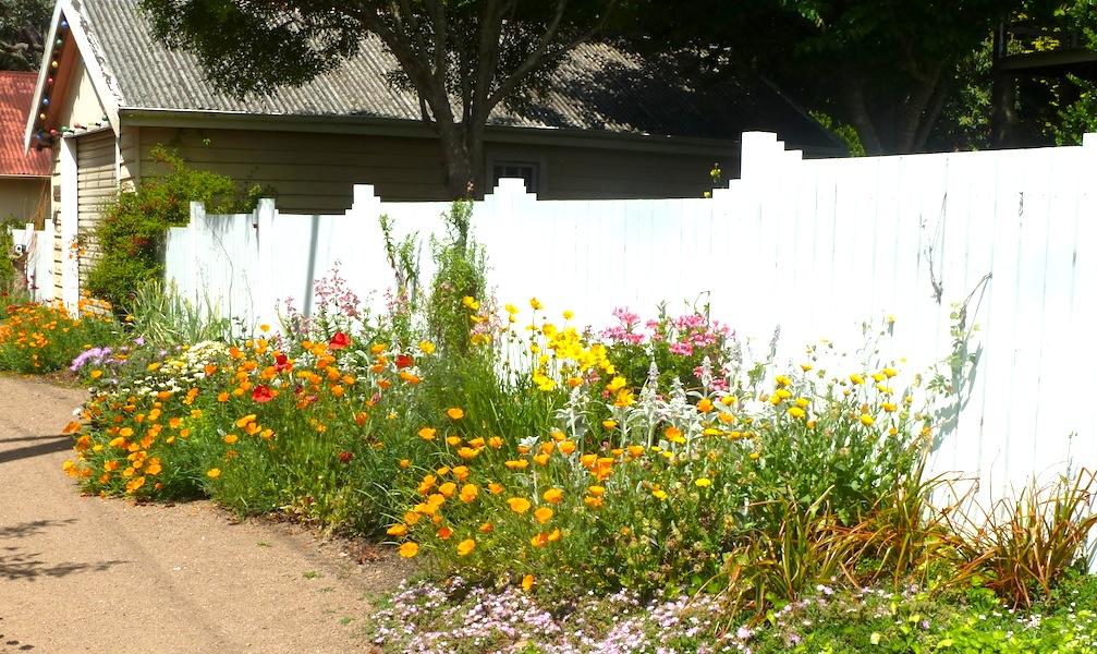 Sunny Bundanoon garden