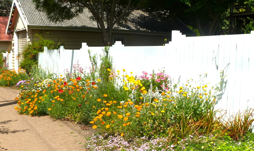 Solving garden design problems GardenDrum
