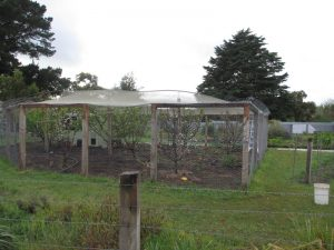 The orchard surrounded by a feral-proof fence