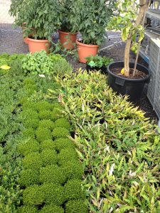 My plants at the nursery