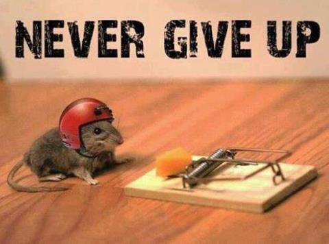 poster-nver-give-up-mouse-with-helmet