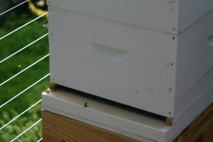 Her simple honey bee hive in action