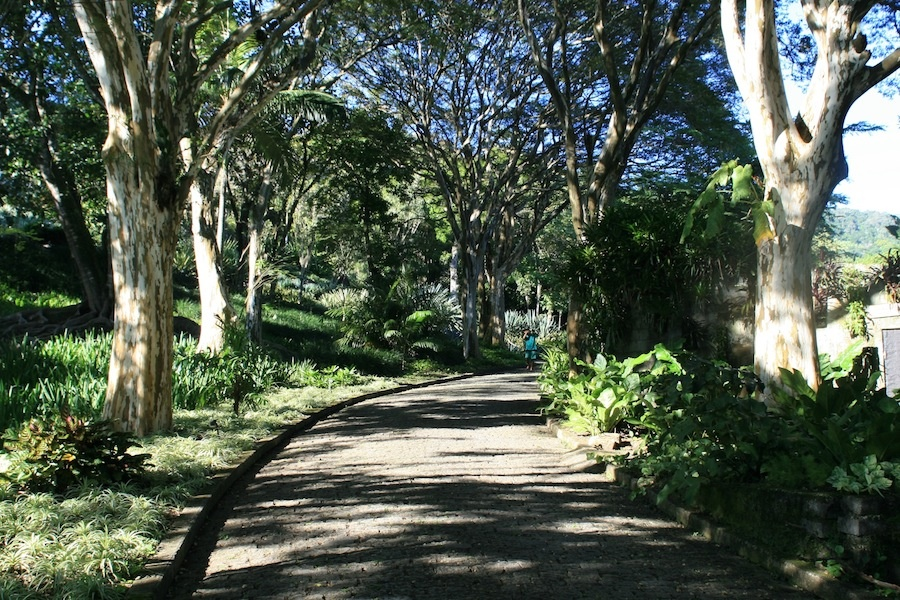 The avenue of leopard trees