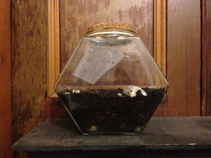 Soph's sad sealed terrarium